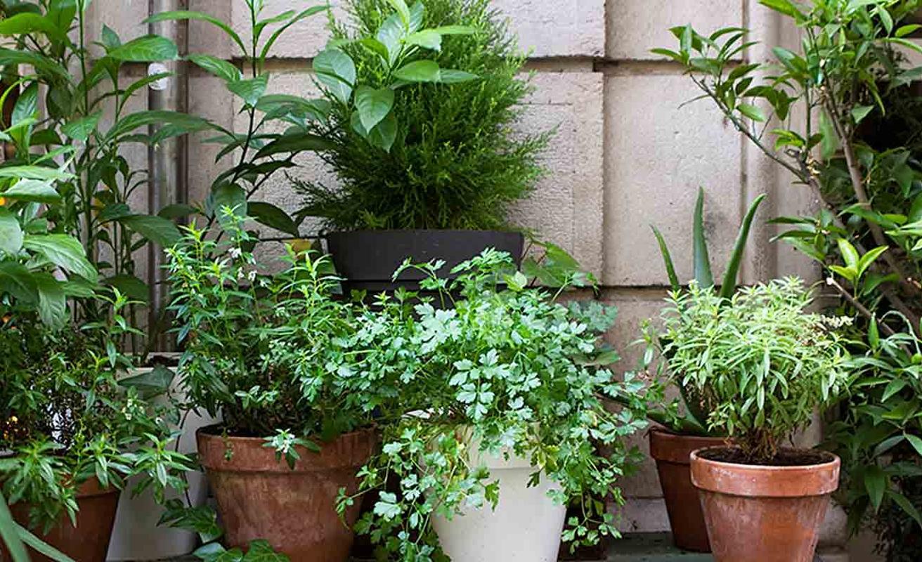 Praktik Garden Hotel Barcelona